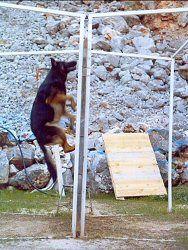 Activité canine