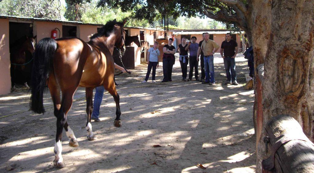 CAFC Casablanca - visite ostéopathie équine - Guy Theunynk sl