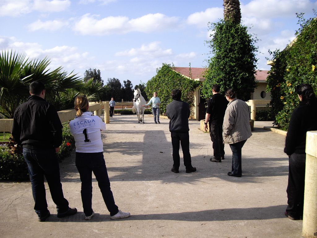 Centre équestre le Carrefour - Maroc - analyse locomotion cheval