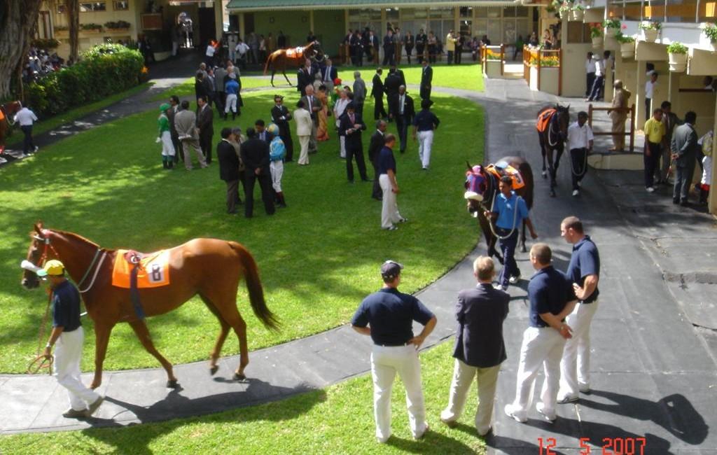 Etude des lésions chez le cheval de courses - Ile Maurice