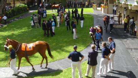 Etude des lésions chez le cheval de courses
