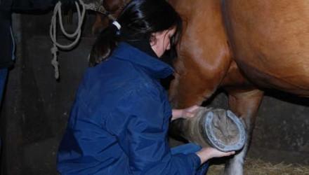 Ostéopathie animale générale