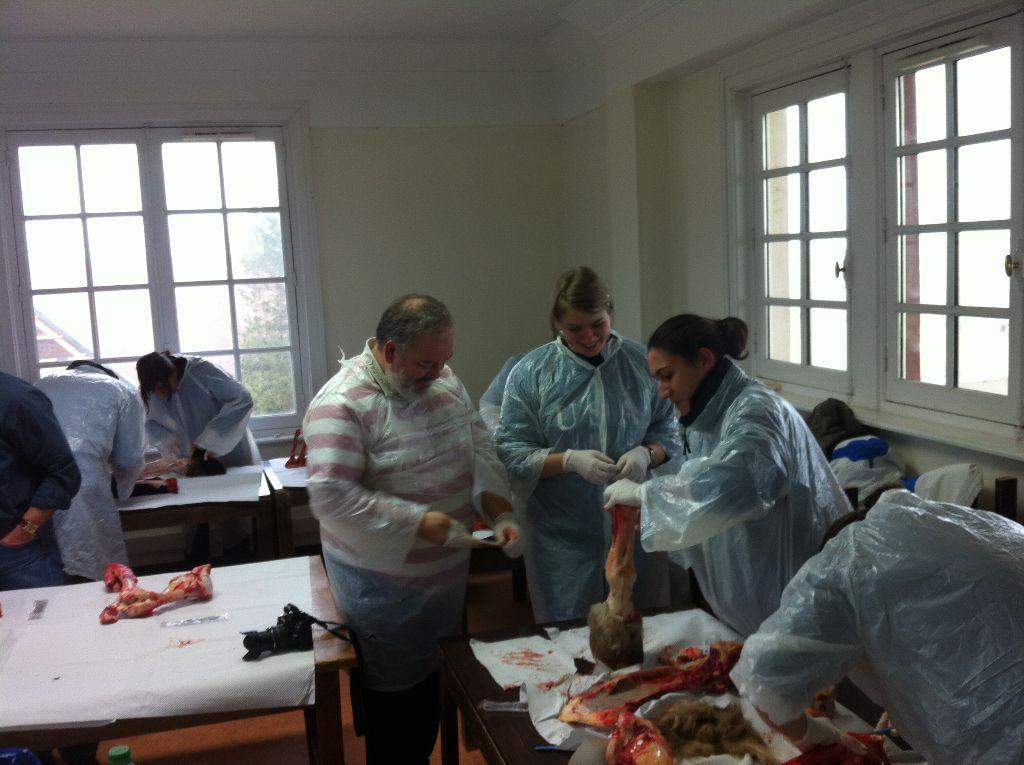 Salle de dissection - Le Touquet