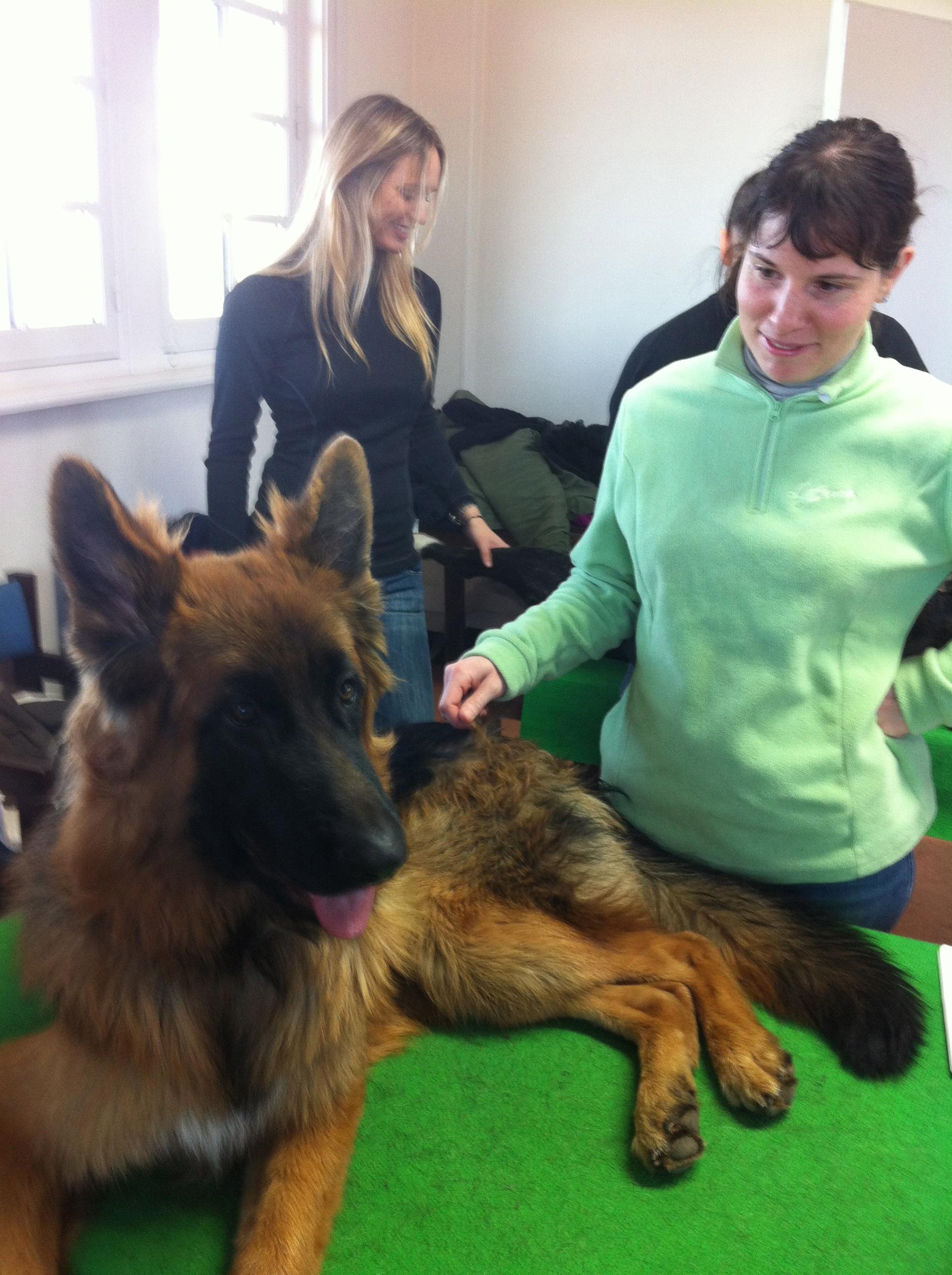 Stage ostéopathie canine - Le Touquet