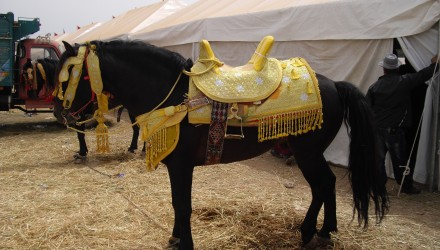 Fantasia - Fqih Ben Salé - Maroc - stage clinic ostéo équine 2