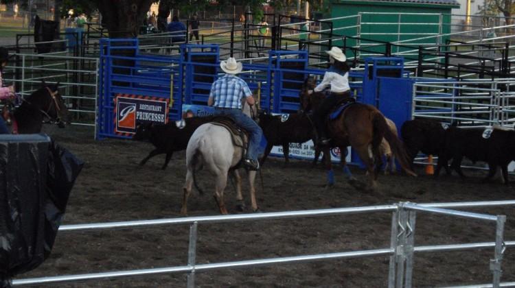 Les lésions chez le cheval d'équitation western